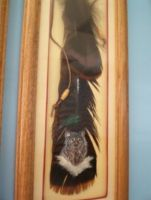 Bobcat Turkey Feather